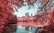 美到窒息-棉花糖般的紐約中央公園